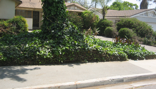 Rubberway Rubber Sidewalks ar Porous and Flexible and Will Not Crack From Tree Root Growth